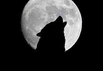 full-moon-1902260_640
