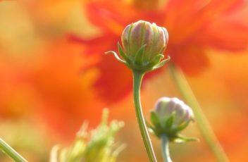 flower-2140061_640