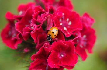 ladybug-1271953_640