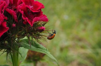 ladybug-1271959_640