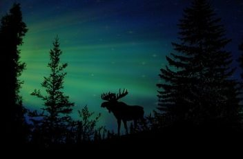 moose-1793632_640
